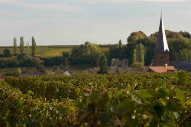 Philipp Kuhn's Weinberge (vineyard)