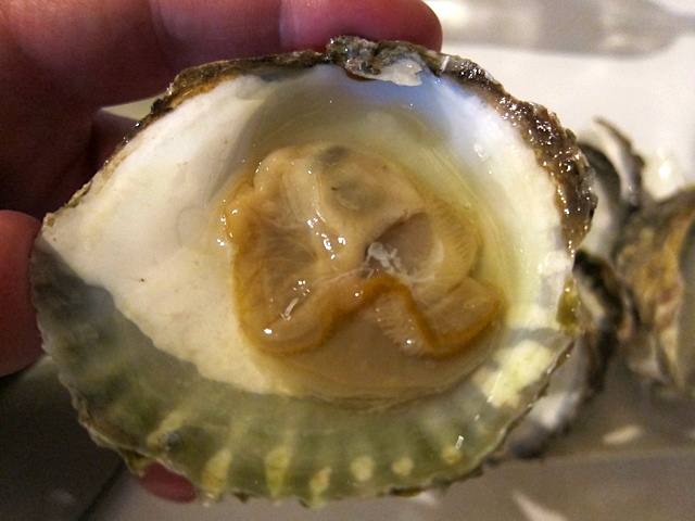 A beautiful, dense, Belon-like Dutch oyster at The Harbour Club