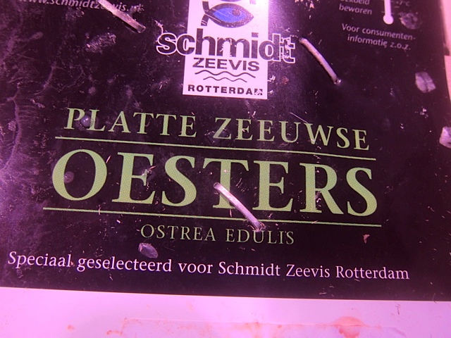 """A box of """"flat"""" oysters from Holland"""