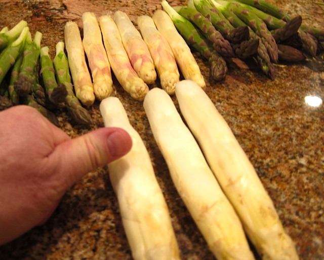 Fat white asparagus from Holland
