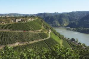 toni-jost-vineyard