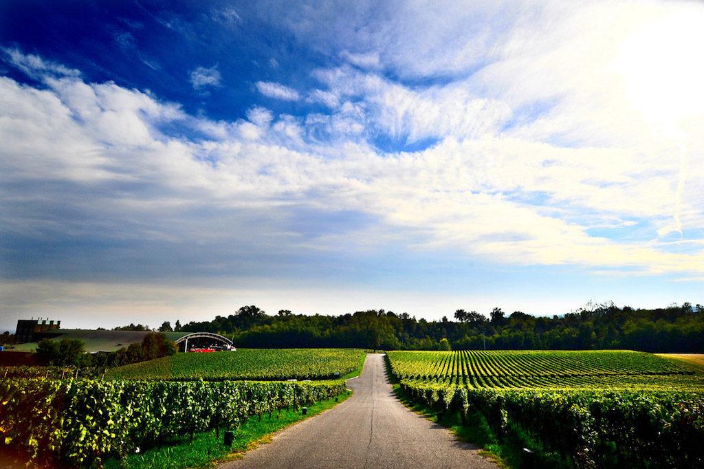 vineyards-at-ca-del-bosco