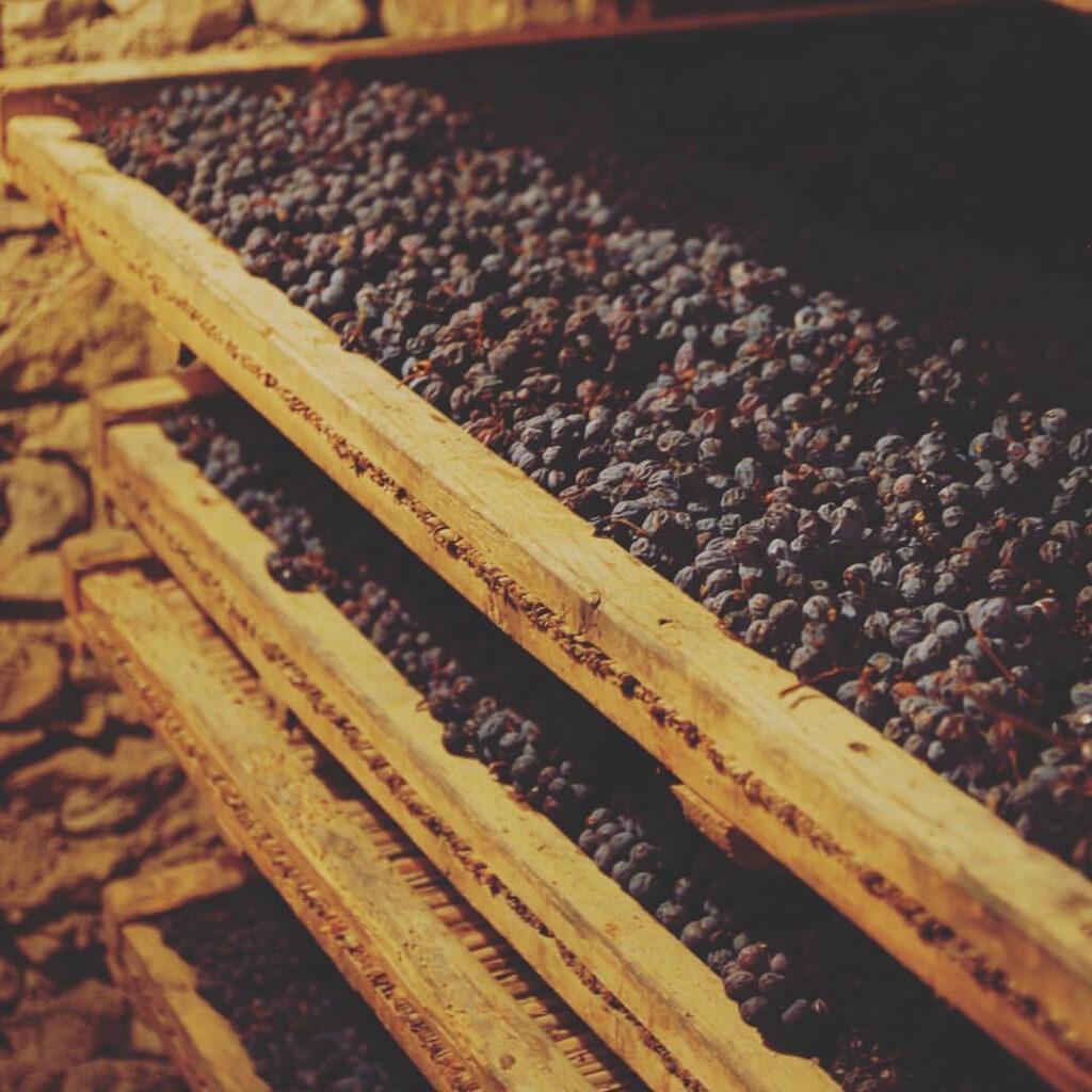 Grapes drying Amarone_consorzio_FB