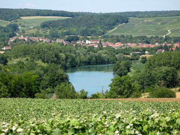 pinot-meunier-vineyard
