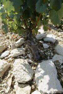 KIMMERDGIAN SOIL Chablis France Wine4Food