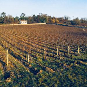 Traveling Somm, Burgundy, MarquisD'Angerville_Volnay_Vineyard_Terroir