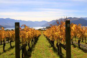 New Zealand Wine 101, Central Otago - Wine4Food