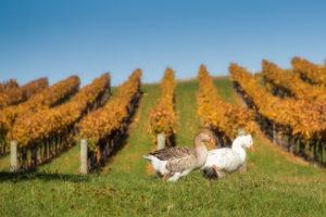 New Zealand Wines 101, Ruby Bay Vineyard, Nelson - Wine4Food