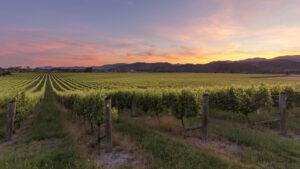 New Zealand Wines 101 Nelson Seifried - Wine4Food