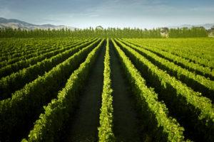 New Zealand Wines 101, Wairarapa, Palliser - Wine4Food